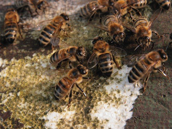 Bienenvolk. Foto: Kamillo Kluth / Flickr | CC BY 2.0