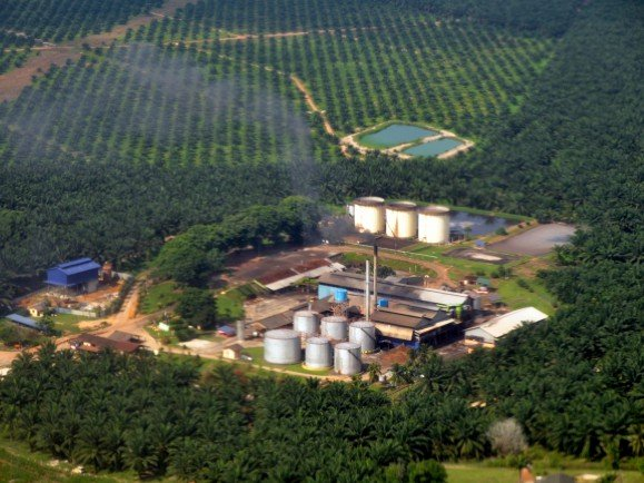Palmöl-Mühle in Malaysia. Foto: Palm oil mill CC BY-SA 2.0 | Marufish | flickr.com