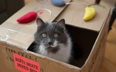 Foto: Cat in a box | CC BY 2.0 | Douglas O'Brien / flickr.com