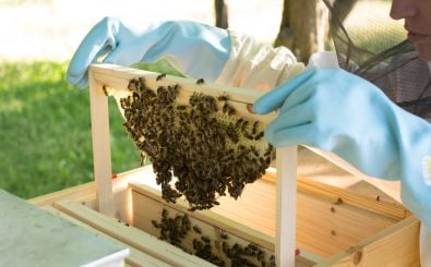 Foto: Bienen im Garten | Rainer Stropek / flickr.com (CC BY 2.0)