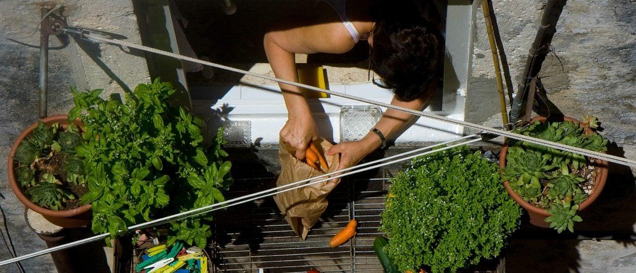 Nicht nur auf dem Balkon, auch auf dem Fensterbrett findet der Stadtgärtner noch Platz für ein bisschen Gemüse. Foto: Vegetables on the balcony CC BY-SA 2.0 | Marcel Oosterwijk / flickr.com