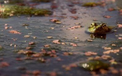 Artenschutz: Fast ein Drittel aller Amphibien sind vom Aussterben bedroht. Foto: Amphibius Sight | Emiliano Ricci | flickr.com | CC BY 2.0