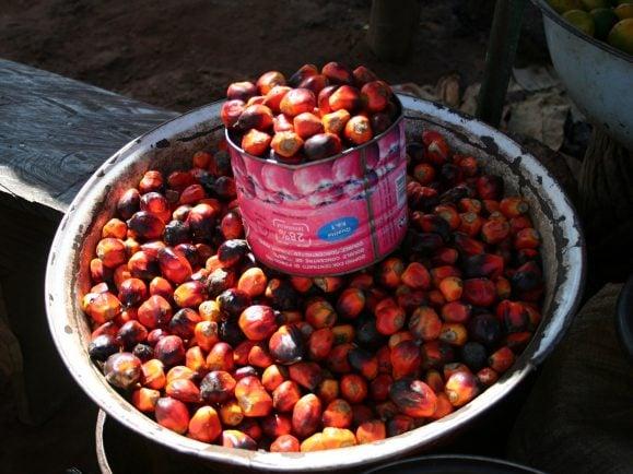 Palmöl