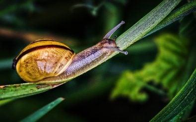 Garten? Gern, aber Schnecken? Nein! Was also tun? Foto: CC BY 2.0 | Ray Bilcliff / flickr.com