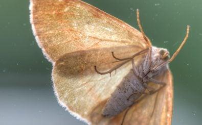 Gekommen, um zu bleiben: Motten. Foto: Moth | CC BY 2.0 | Ervins Strauhmanis / flickr.com