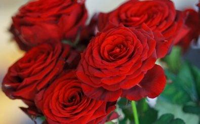 Wenn es um die Liebe geht, bleiben manche Dinge über alle Generationen hinweg gleich. Das gilt nicht nur für Symbole wie die Rose, weiß pro famila-Geschäftsführerin Claudia Hohmann zu berichten. Foto: CC BY 2.0 | 2009-12 München 100 / Allie_Caulfield / flickr.com