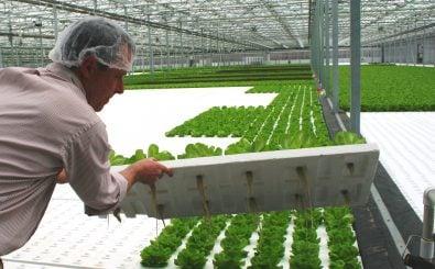 Pflanzen in einem hydroponischen Gewächshaus wachsen nicht auf der Erde, sondern nur im Wasser. Foto: Green City Growers Tour 062 by AR (17)./ credits: CC BY 2.0 | Horticulture Group / flickr.com