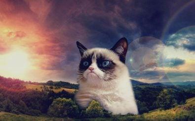 Auch für den größten Pessimisten gibt es Hoffnung. Mit den Tipps von Till Eckert. Foto: nature_trees_cats_hdr_photography_grumpy_cat_1920x1080_39804 CC BY-SA 2.0 | ビッグアップジャパン / flickr.com