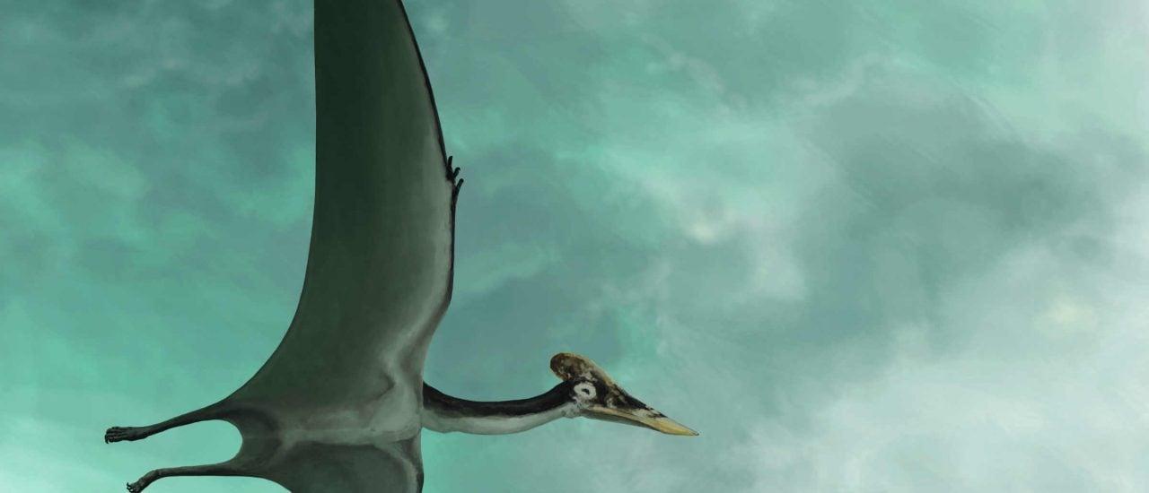 """Der Flugsaurier """"Dracula"""" sorgt unter Dinosaurierfans für Euophorie. Bild:"""