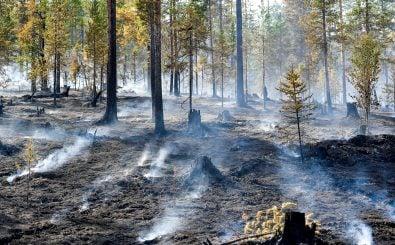 Waldbrände: wüten diesen Sommer in Griechenland, Schweden und jetzt auch Brandenburg. Foto: Maja Susja | AFP
