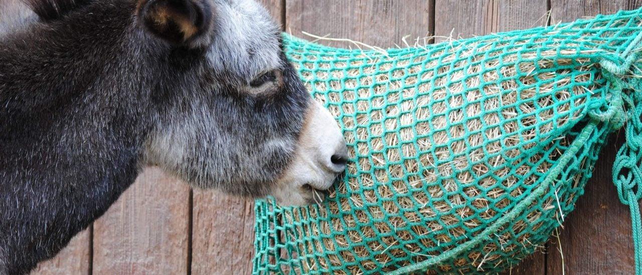 Der natürliche Feind des Wolfes – der Esel? Foto: Uta Over | shutterstock.com