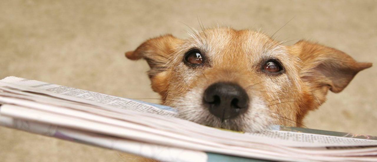Wie lernen die Fellnasen von Herrchen und Frauchen? Foto: Sue Mc Donald | shutterstock.com