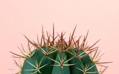 Der Kakteentrend hat Nebenwirkungen. Foto: BillyBlakkr | Shutterstock