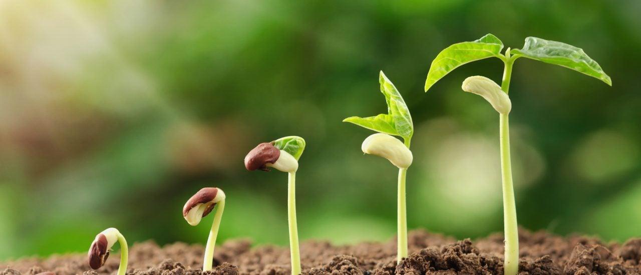 Eigentlich sind Patente auf konventionell gezüchtete Pflanzen verboten. Aber die Regelungen sind für einige nicht weitreichend genug. Foto: lovelyday12 | shutterstock.com