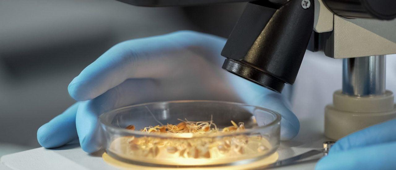 Je mehr die Weltbevölkerung wächst, desto wichtiger ist es, die genetischen Grundlagen von Weizen zu erforschen. Foto: Motortion Films | shutterstock