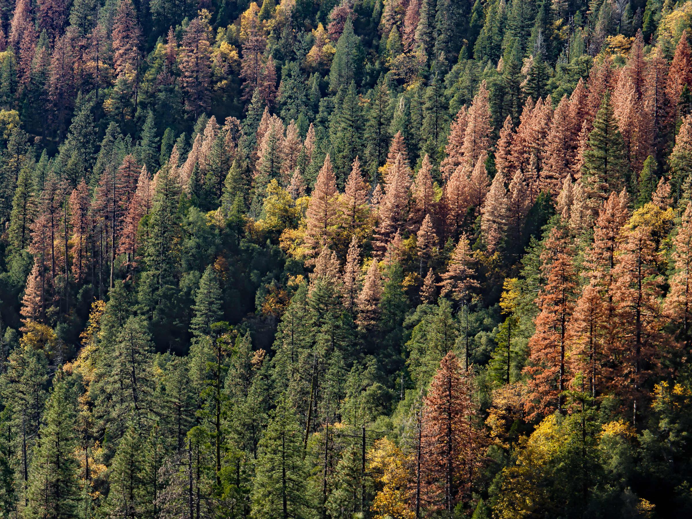 Schwierigkeiten bei der Aufforstung – Der Wald regelt das? | detektor.fm