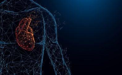 Mit der neuen Ultraschall-Diagnostik ist es möglich, auch die internen Abläufe des Herzmuskels darzustellen. Damit können neuen Behandlungsmethoden zum Beispiel gegen Kammerflimmern entwickelt werden. Foto: Illus Man | Shutterstock