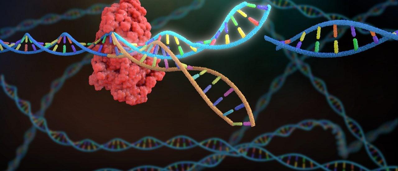 Mit der Crispr-Cas9 Genschere kann DNA gezielt verändert werden. Foto: Nathan Devery | Shutterstock