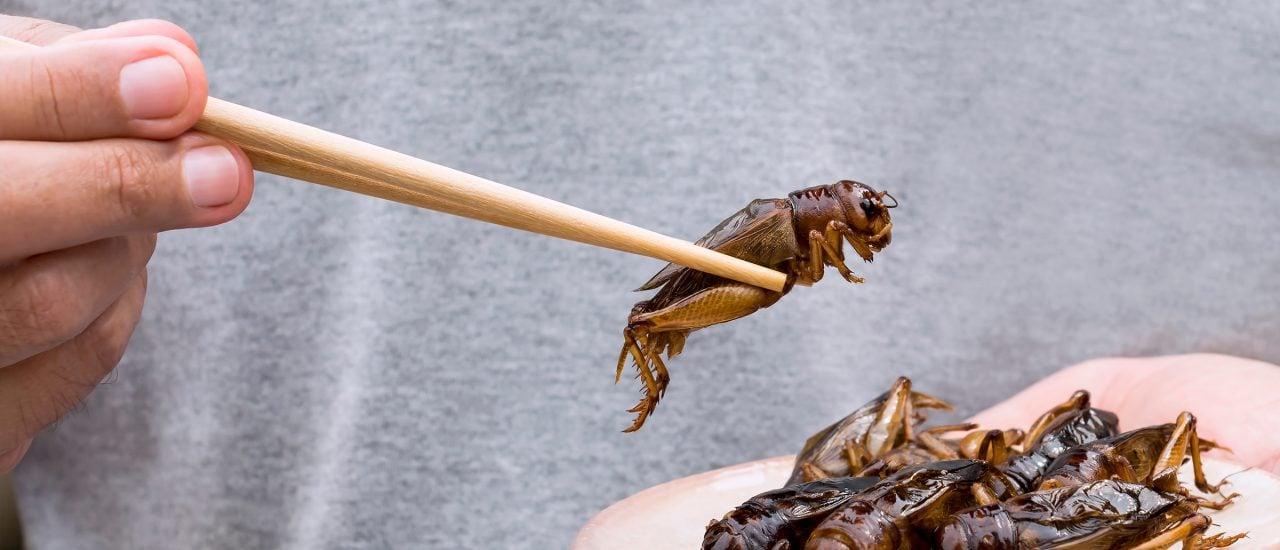 Das Insektensterben hängt auch mit unserem Fleischkonsum zusammen. Foto: nicemyphoto | shutterstock