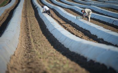 Saisonarbeitskräfte Foto: Sebastien Bozon / AFP